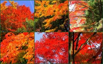 2010-11-28.jpg